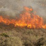 desbroce-incendio-terrenos-150x150